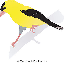 Beautiful yellow bird. Vector