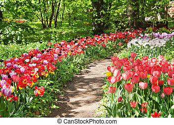 Path in a botanical garden
