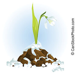 snowdrop growing vector