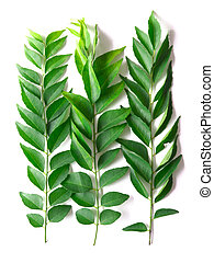 close up of fresh indian curry leaves