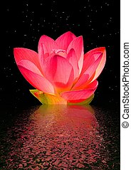 water lily and sky