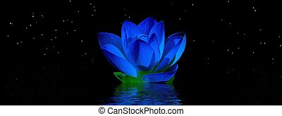 water lily blue and sky