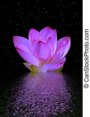 water lily purple and sky