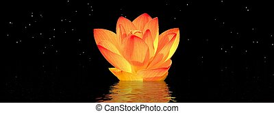 water lily orange and sky