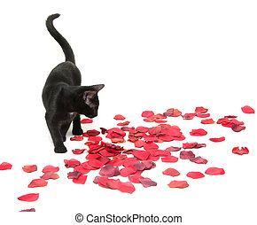 Black cat and rose petals - Cute black pet cat with rose...