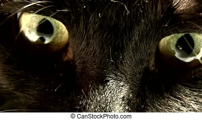 Animal Eye, - sinister cat eyes