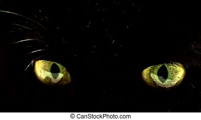 Animal Eye, - sinister cat eyes .