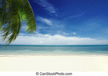 palm - View of nice tropical beach with some palms around...