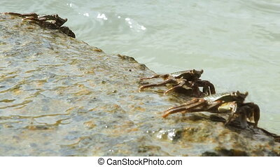 crab on the stone