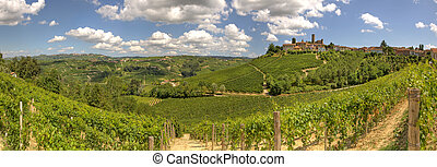 Panoramic view on vineyards and hills in Italy. - Panoramic...