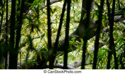 wind shaking bamboo,Trunk,branches,quiet atmosphere in...