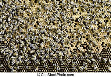 apiary - an apiary closeup