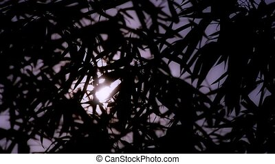 wind shaking bamboo silhouette