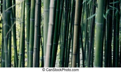 wind shaking bamboo,quiet atmosphere