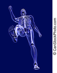 XRay Man from Below - 3D render simulating an Xray image of...