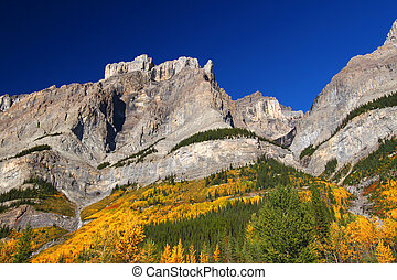 Fall Foliage in Banff Park - Fall foliage amidst jagged...