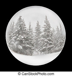 Snow globe on black - Snow globe with spruce trees in winter...