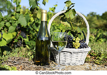 harvest and wine - glass and bottle of wine and grapes in...