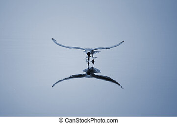 Flew over the cold river - Flying over the river gull...