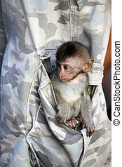 Small monkey - The small monkey in a pocket of trousers
