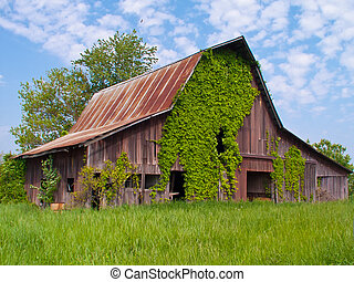 Old Barn With Ivy and Blue Sky Background - Old Barn with...