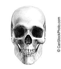 humano, cráneo, -, frente, vista