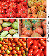assorted tomato collage