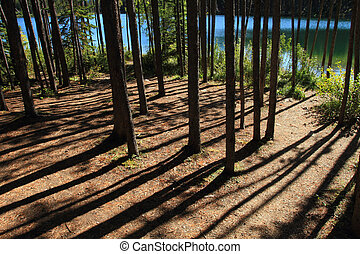 Forest Path and Lake - A walking path through a grove of...