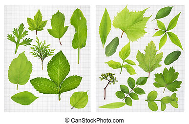 School herbarium - green leaves of the European plants on...