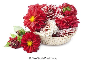 cesta,  dahlias, vermelho