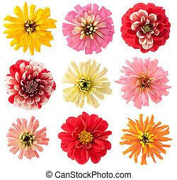 Favourite garden flowers set - Favourite summer european...