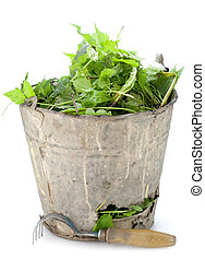 Old bucket full of garden weeds - Old rusty bucket full of...