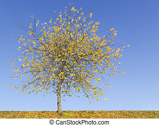 Lonely yellow tree against on sky