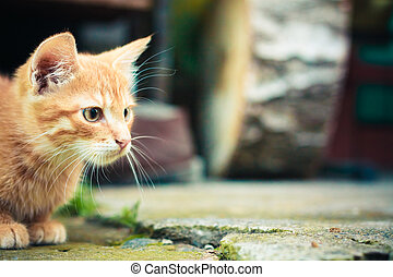 red kitten - A red kitten sitting on a stone background