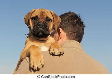puppy Bull Mastiff - a man holding on his shoulder his puppy...