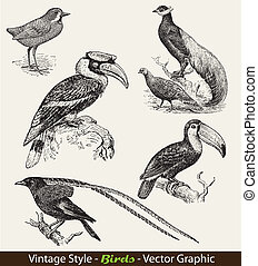 vector set birds - vintage style