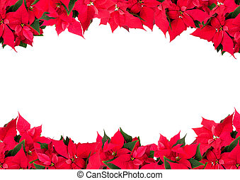 Christmas Frame of Flowers - Poinsettia Euphorbia...