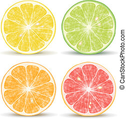 Citrus Fruits - Vector citrus fruits: orange, lime,...