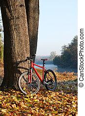 rouges, Vélo, debout, Coffre, grand, arbre