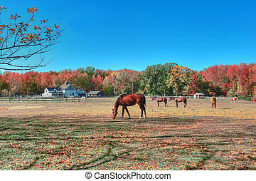 Rustic Maryland horse farm in Autumn - High Dynamic Range...