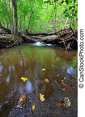 Natural wild mountain stream in a Maryland forest - A wild...