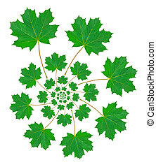 Maple Leaf Pattern - Maple leaf pattern on white background