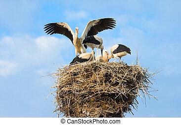 Storks - Family of storks on a nest
