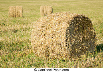 Haystack - Hay bale field in august