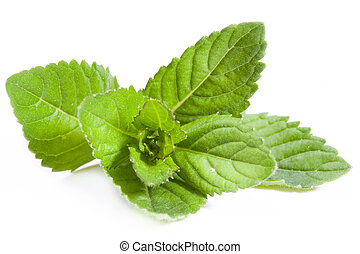 Peppermint - Fresh mint isolated on white background