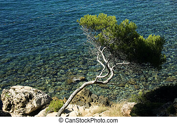 Curved mediterraneen pine and clear water on mediterraneen...