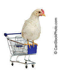 Chicken sits on shopping cart, isolated on white background