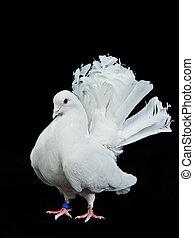 Beautiful white decorative dove