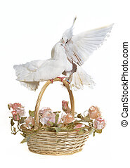 Basket with wedding flowers and doves