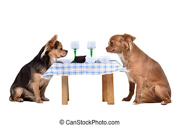 Two chihuahua dogs at the table, isolated on white...
